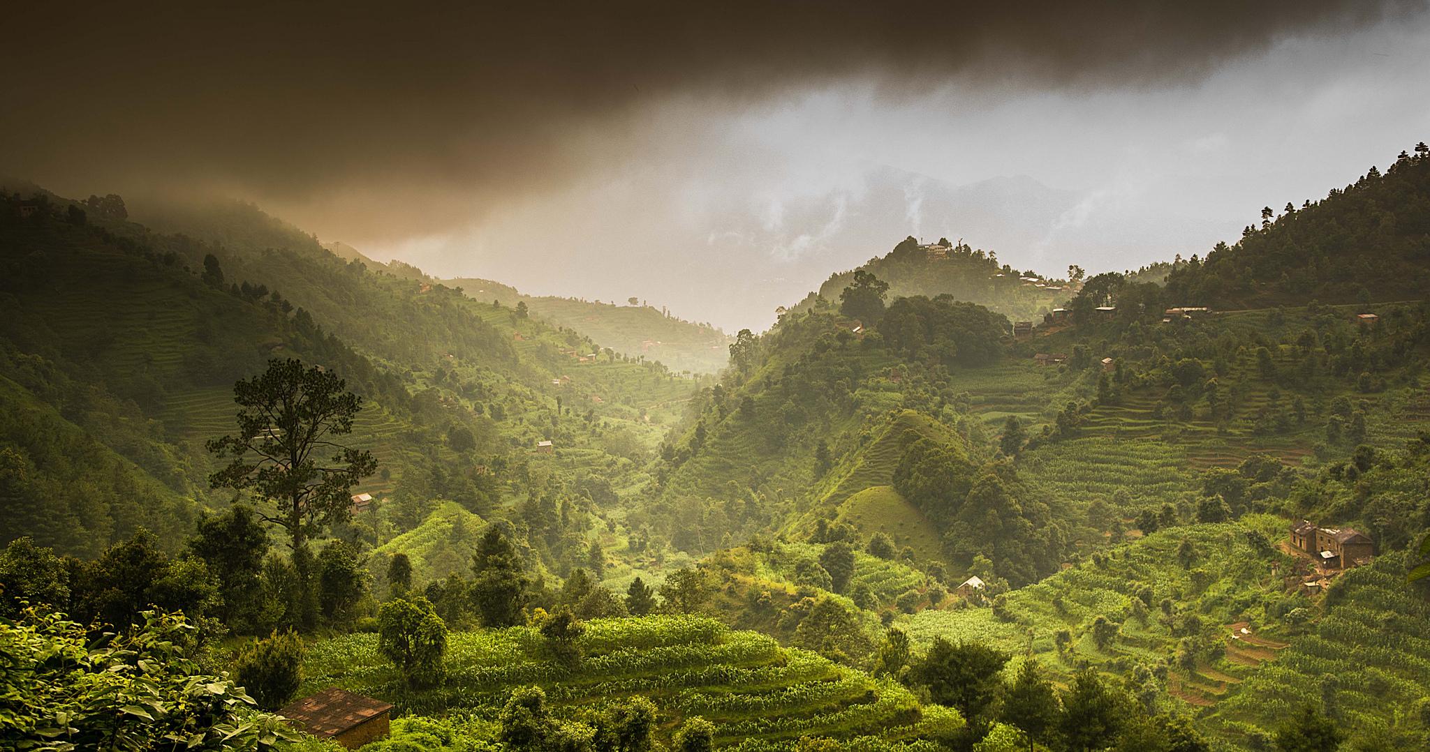 Mountains and Rice fields of Nepal_Sharada Prasad